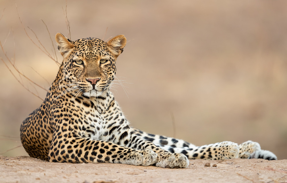 Zambia , South Luangwa N.P.